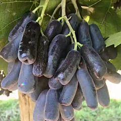 AU Fresh 澳洲水果 金手指黑提 2KG