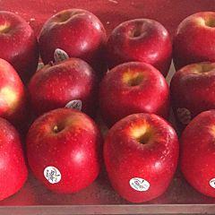 NZ Taylor 新西兰水果 红玫瑰苹果12个